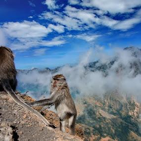 Tempatku bermain by Adhii Motorku - Landscapes Mountains & Hills
