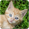 Game Cat Games Free Puzzles APK for Windows Phone