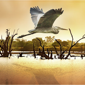 by Stephen Hooton - Animals Birds ( water, bird, gambia, trees, swamp )