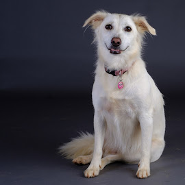 Lucy/Goosey/Muppet by Phil Anderson - Animals - Dogs Portraits ( studio, fujifilm, dog, profoto, portrait )