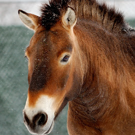 by Guillaume Charette - Animals Horses
