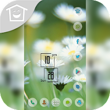 White spring flowers theme