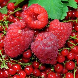 cranberries with raspberries by LADOCKi Elvira - Food & Drink Fruits & Vegetables (  )