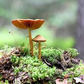 by РАЙНА СИНДЖИРЛИЕВА - Nature Up Close Mushrooms & Fungi