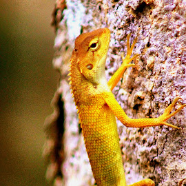 by Sultan Firaun - Animals Reptiles