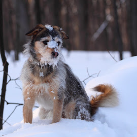 Nafanail by Nail Asfandiarov - Animals - Dogs Portraits ( snow, forest, dog )