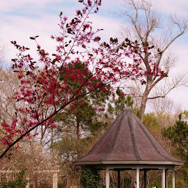 park by Brenda Shoemake - City,  Street & Park  City Parks