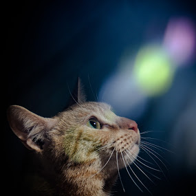 SHINE ON NICE by Habeeb Alagangan - Animals - Cats Portraits ( cat, awesome, beautiful, nice, portraits, animal )