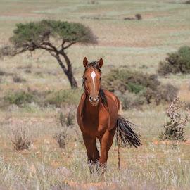 by Lanie Badenhorst - Animals Horses