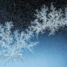 Frost on Kitchen Window 2 by Paul Reese - Nature Up Close Other Natural Objects