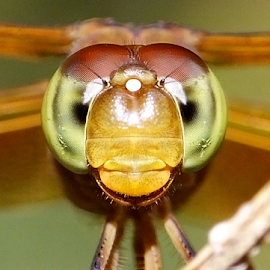 My eyes by Ibnu Hibban - Animals Insects & Spiders