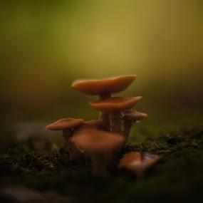 by Cenk M - Nature Up Close Mushrooms & Fungi