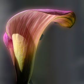 by Doreen Rutherford - Nature Up Close Flowers - 2011-2013 ( pwcstilllife )