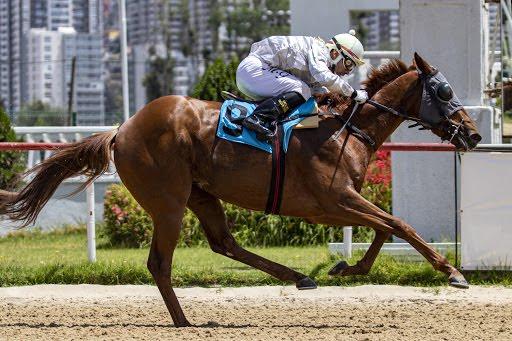Leon Felipe (Monthir) se lleva  Condicional (1100m-Arena-VSC). - Staff ElTurf.com