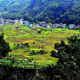 dentam valley, west sikkim. by Ajanta Ghosh - Landscapes Prairies, Meadows & Fields (  )