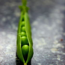 Peas, tastes juicy and sweet! by Lakshmi Sharoff - Nature Up Close Gardens & Produce ( macro, nature, harvest, garden, peas )