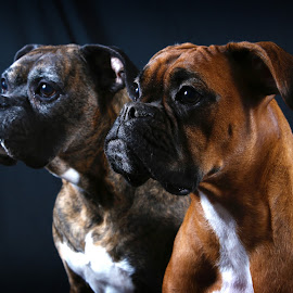 by Todd Klingler - Animals - Dogs Portraits