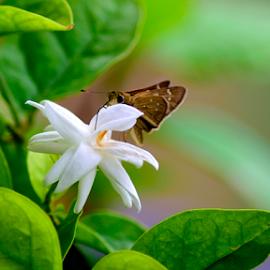 My Garden by Sudhakar Kumar - Nature Up Close Gardens & Produce ( butterfly, nature, green, garden, flower )