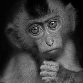 Monkey bw by AbngFaisal Ami - Black & White Animals