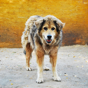 Old lady in the shelter by Adrienn Liker - Animals - Dogs Portraits ( old, shelter, beauty, dog, animal )