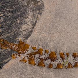 by Sverre Sebjørnsen - Nature Up Close Sand