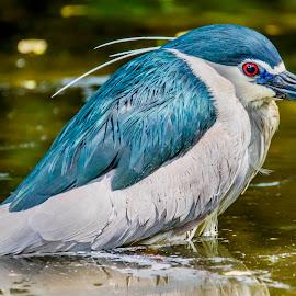 Im Fishing  by Ken Nicol - Animals Birds (  )