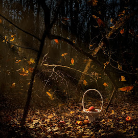 by Adrian Palade by Adrian Palade - Landscapes Forests ( magic, apple, basket, apples, forest, leaves, fruit basket )