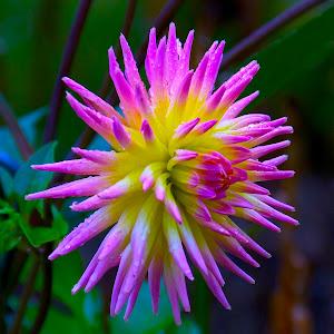 IMG_2964 Flower.jpg