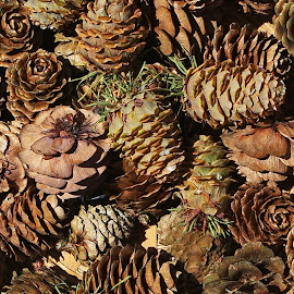 Cones by Ingrid Anderson-Riley - Nature Up Close Other Natural Objects