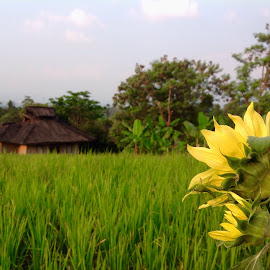 by Arief Putranto - Instagram & Mobile Other ( mobilography, paddy field, mobile photos, green, greenery, landscape, flower )