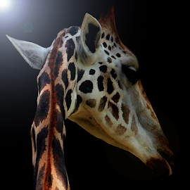 Hit the Light by Yohanes Arief Dewanto - Digital Art Animals ( giraffe, digital art, digital, photoshop, animal )