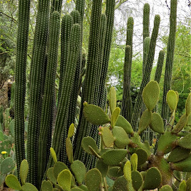 Cactus Garden by Loreen Parkerson - Nature Up Close Other plants