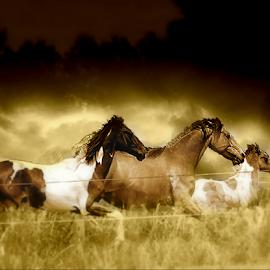 Horses on the Run by Darlene Lankford Honeycutt - Digital Art Animals ( animals, horses, dl honeycutt, running, digital, dusty )
