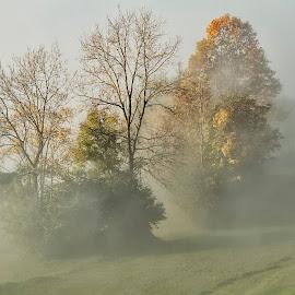 Trees in mist by Rado Krasnik - Landscapes Prairies, Meadows & Fields ( magic, nature, autumn, trees, mist )