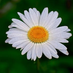 by Martin Marthadinata - Nature Up Close Flowers - 2011-2013
