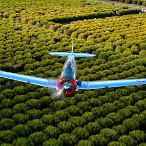 T-6 And Orange Groves by Brent Clark - Transportation Airplanes ( aviation, t-6, warbird, airplane, transpotrayion air to air photography, texan, classic )