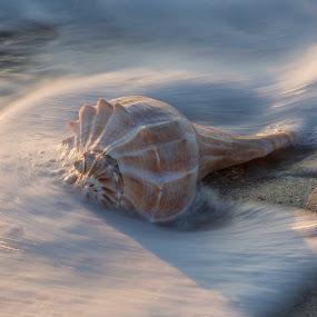 Shell in waves by Jack Nevitt - Uncategorized All Uncategorized