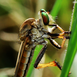 by Hernawan Safari - Animals Insects & Spiders