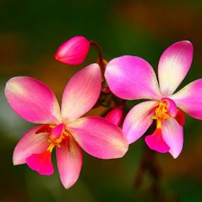 by Syam Alendu Nair - Nature Up Close Flowers - 2011-2013