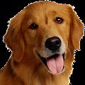 Dog Breeds APK for Bluestacks