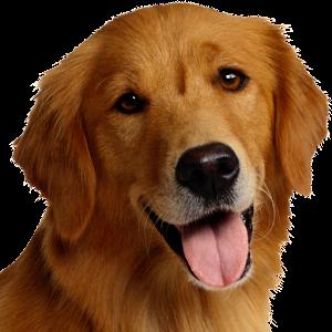 Editors Choice Dog Food