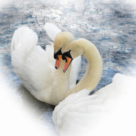 the lovers by Kathleen Devai - Digital Art Animals ( water, love, swans, art, feathers, river )