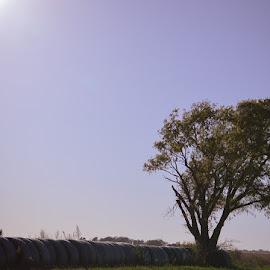 Farm Tree by Kayla House - Landscapes Prairies, Meadows & Fields ( farm, farmer, sunset, hay bales, hay, farmland, trees, farming, country,  )