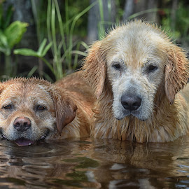 Ginger and Marley by James Betts - Animals - Dogs Portraits ( dogs water, dogs )