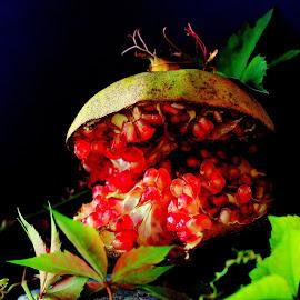 Granate by Renata Ivanovic - Food & Drink Fruits & Vegetables ( grana, red, pomegranate, fruits, close up,  )