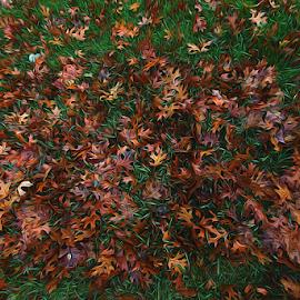 by Dipali S - Digital Art Abstract ( plant, oak leaves, wood, decoration, backgrounds, leaf, multi colored, maple tree, winter, season, autumn, freshness, october, mapple leaf, oak tree )