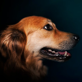 Floh by Michael Norbert - Animals - Dogs Portraits ( flash, pet, hund, fur, floh, dog, cute, teeth, portrait, eyes )