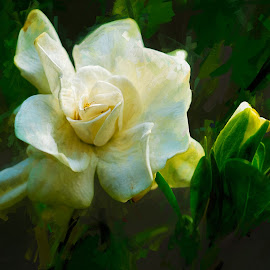 Carnation by Robert Mullen - Digital Art Things ( white flower, green leaves, carnation, spider, flowers, flower,  )