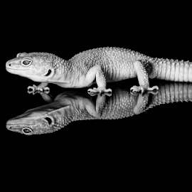 Gecko by Garry Chisholm - Black & White Animals ( macro, gecko, nature, reptile, lizard, garry chisholm )