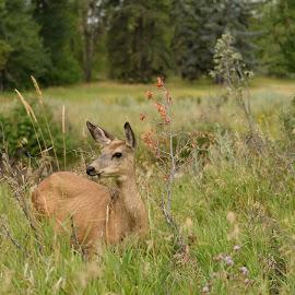 Inglewood bird sanctuary  by Flora van Wageningen - Novices Only Wildlife ( park, wildlife, landscape, deer )